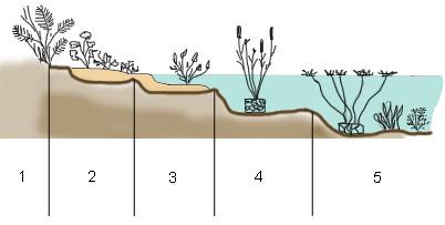 Hochteich Teichzonen Übersicht Pflanzen